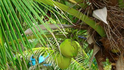 Bird on coconut tree Footage