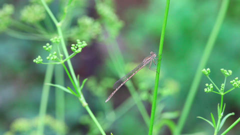 Dragonfly Live Action