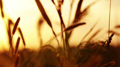 Prairie Grass And Sunset. 4K stock footage