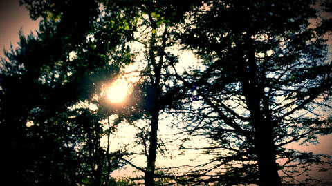 Sunlight And Trees stock footage
