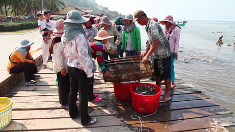 Selling crabs on the market Footage