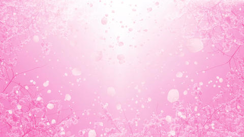 Sakura Blossoms stock footage