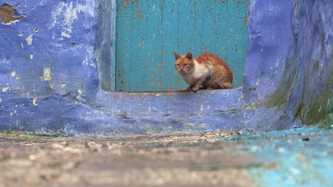FT 0048 Street Cat in Chefchaouen 24 P PJ 95 No Au Footage