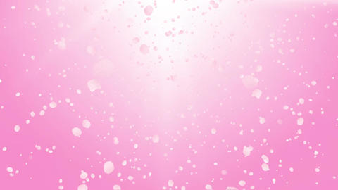 Sakura Blossoms Stock Video Footage