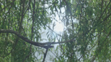 Sun Reflects In Water Through Willow Tree Twigs stock footage