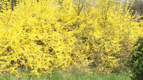 Beautiful Yellow Plants, Nature, Sky, Beautiful, T Footage