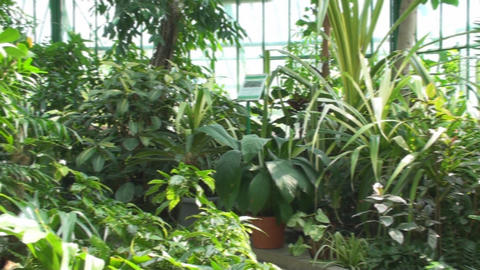 Tropical Plants In A Green House, Green, Eco, Natu Footage