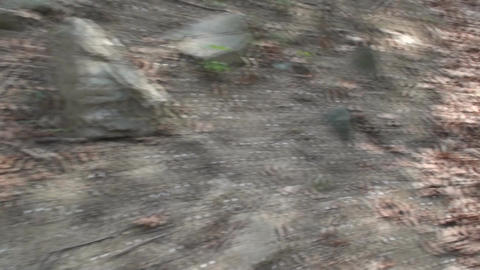 Running Trough The Woods, Nature, Hiking, Point Of Footage