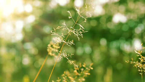 Dry Stalks Of Herbs And The Sun stock footage