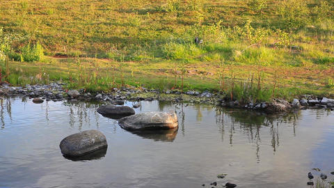 Rock In A Tranquil Pond Or Lake stock footage