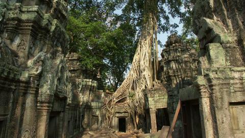 Timelapse Ta Prohm Cambodia Live Action