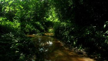 Timelapse jungle stream Footage