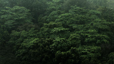 Timelapse tree-top monsoon Footage