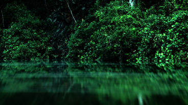 Timelapse Botanical Gardens Swamp stock footage