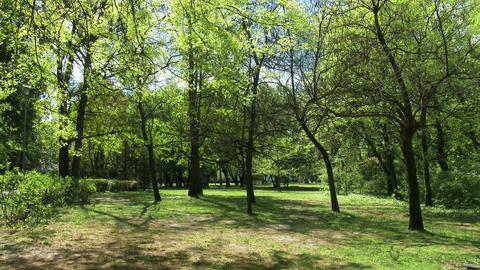 4K Beautiful Park 2 Footage