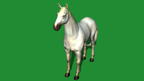 White horse foal pet,farm animal wild life Animation