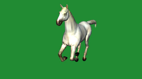 White horse foal pet running,farm animal wild life Animation