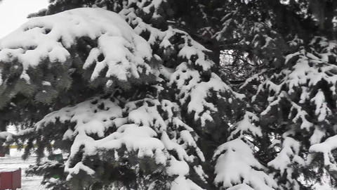 winter park Footage