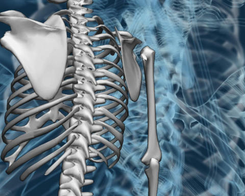 bone structure Stock Video Footage