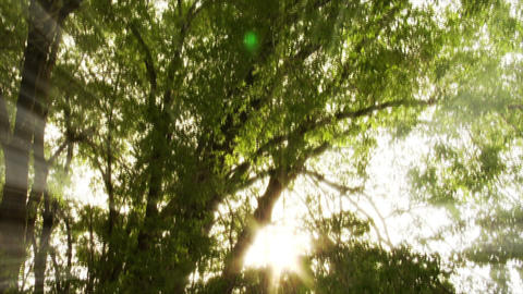park trees Stock Video Footage