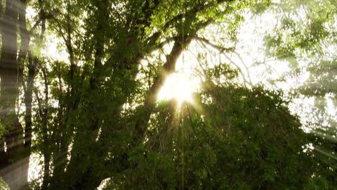 park trees Footage