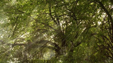 park trees Stock Video Footage