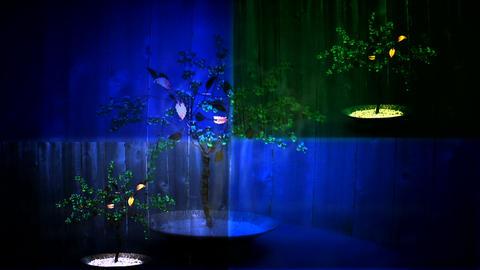 beaded tree 2 Animation