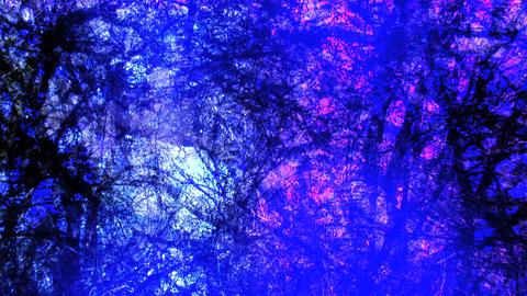 overhead trees Stock Video Footage