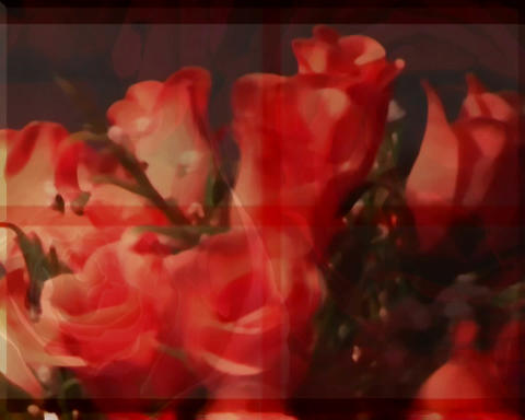rotating roses Animation