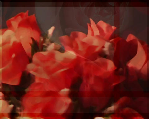 rotating roses Stock Video Footage