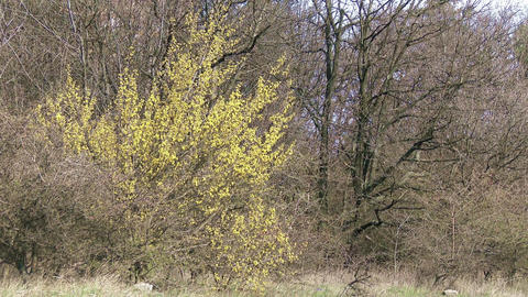 4K Early Spring Trees Footage