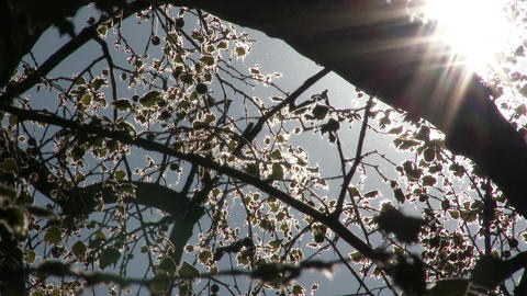 4 K Mysterious Sunlight Shining through Leaves 4 Footage