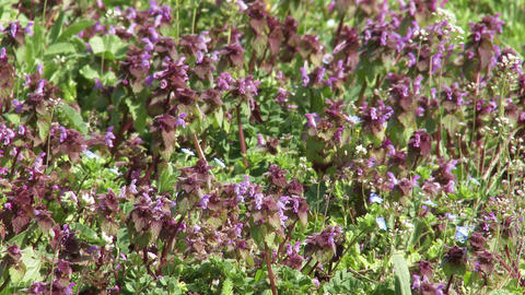 4K Spring Wild Flowers 2 Footage