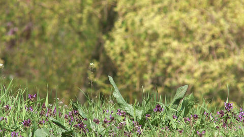 4K Spring Wild Flowers 4 Stock Video Footage