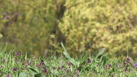 4K Spring Wild Flowers 4 Footage