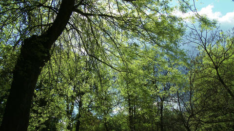 4K Springtime Forest 1 lowangle Footage
