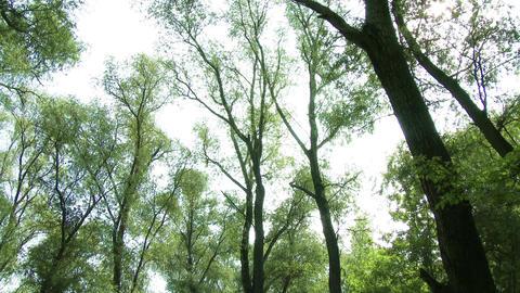 Continental Forest 9 tilt Footage