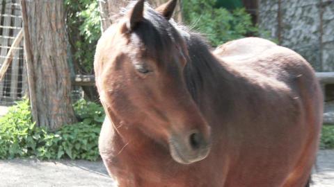 Pony Horse 1 Footage