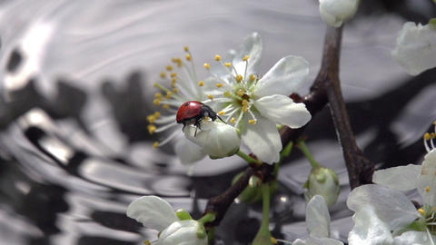 Ladybird and Spring Rain Footage