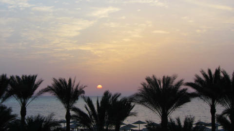 beautiful landscape with palms and sunrise over se Footage