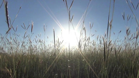 walking through the grass with sunlight Footage