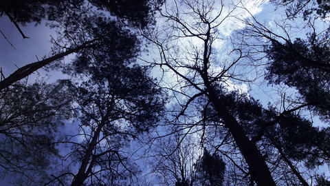 Forest under dark blue sky Stock Video Footage