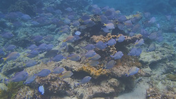 Caribbean Snorkeling stock footage