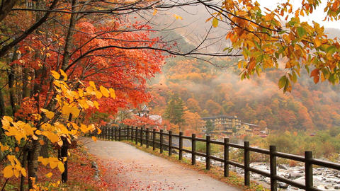 Autumn. Mountain hotel on the banks of the river Footage