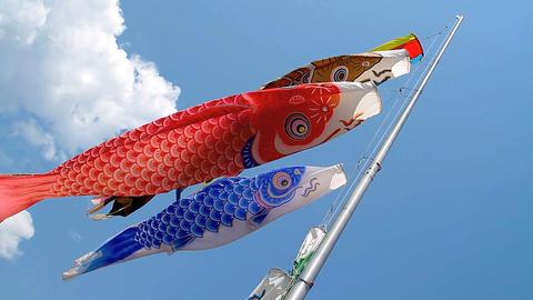 Carp kite flying (koinobori) ライブ動画