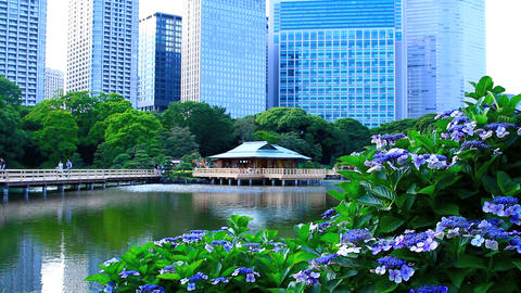 The Tea House In Hamarikyu Garden stock footage