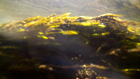 seaweed underwater in sun beams Footage