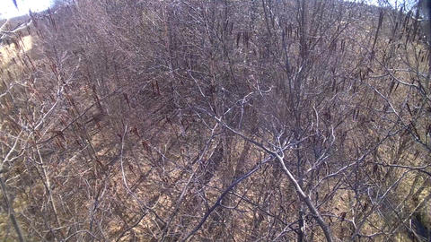 spring wood from krone height on a tree Footage