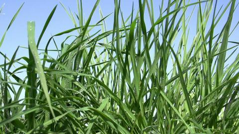 Spring Grass Footage