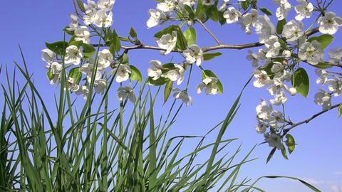 Spring Flowering Footage
